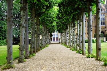Photo of a well managed line of trees leading up to a stately home in Cheltenham.